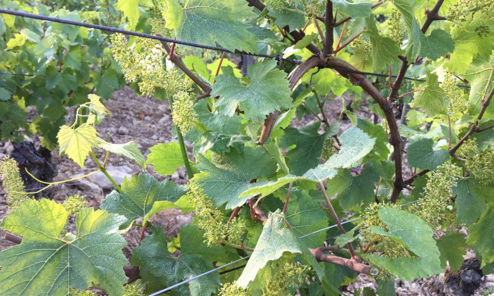 Visuel actualité Une journée dans les vignes