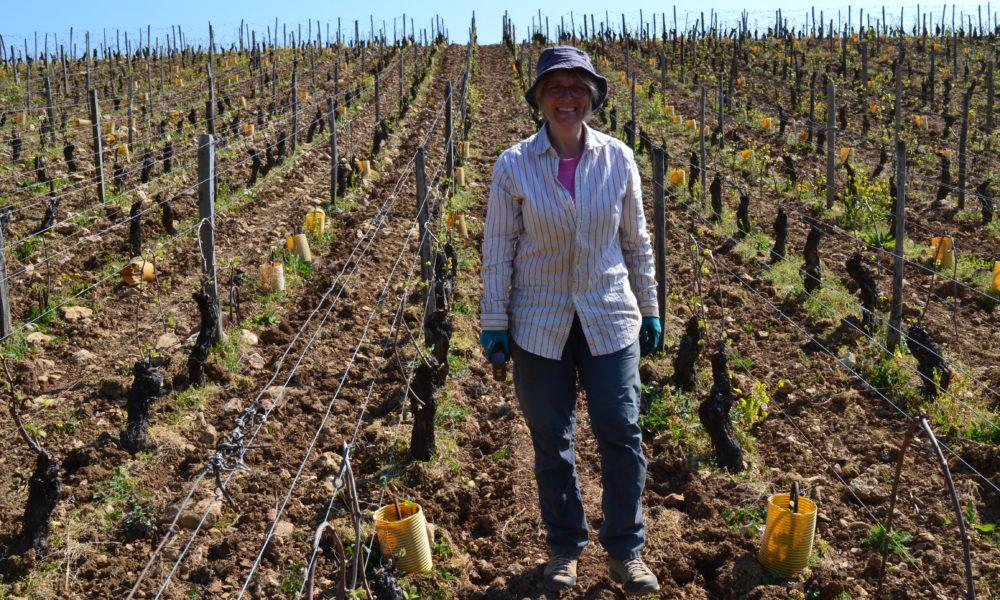 Visuel actualité Des ceps de vignes pour l'avenir