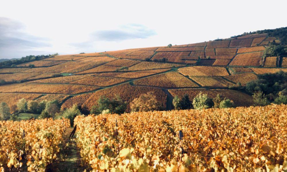 Visuel actualité Soutenir l'artisanat et les traditions de la Bourgogne